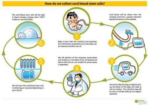 Cord Blood Chart - Cord Blood Stem Cells - Cord Blood ...