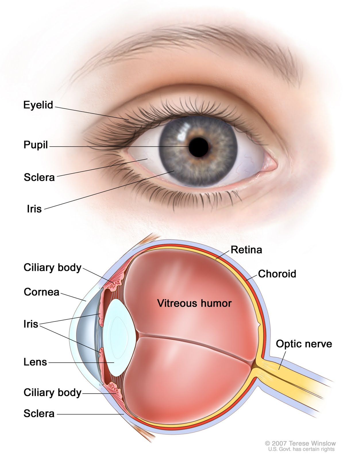 Eye diagram diagram of the eye eye diagrams human eye human source gafas eye diagram alt ccuart Choice Image