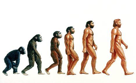 Evolution of Humans visual