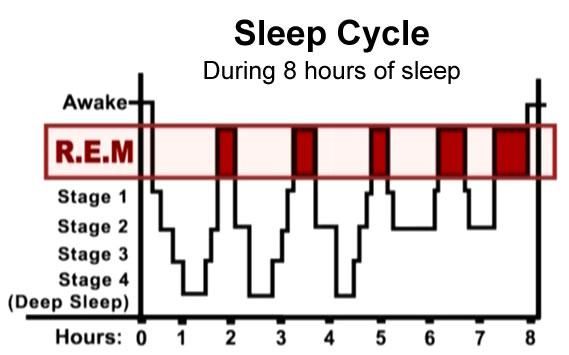 Sleep cycle sleep diagram how much sleep do i need sleep dream